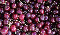 Узбекистан может укрепить самостоятельность ЕАЭС в построении устойчивых продовольственных систем