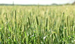 Сельское хозяйство способно стабилизировать экономики стран Центральной Азии в период пандемии коронавируса