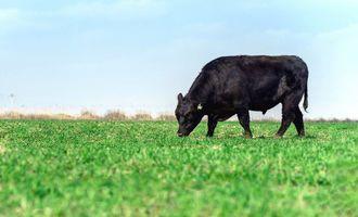 Как агрокластер в Джизакской области поддерживает продовольственную безопасность в Узбекистане