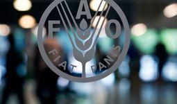 В мае ФАО зафиксировала очередное снижение глобальных цен на продовольственное сырье