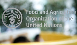 O'zbekiston i FAO 2021-2025 yillarga mo'ljallangan 17 mln. AQSh dollarlik dasturni qabul qildi