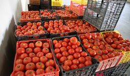 Rosselxoznadzor Rossiyaga Farg'ona viloyatidagi pomidorlarni olib kirishga ta'qiqni qisman bekor qildi