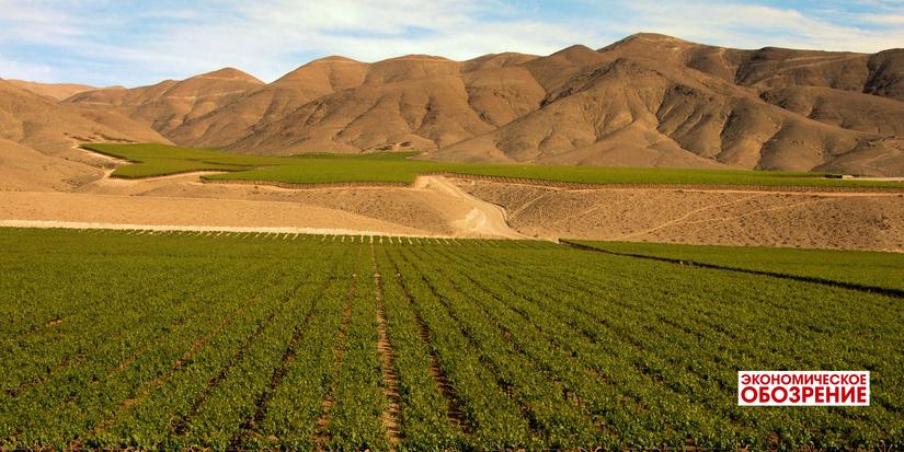 Сельскохозяйственный ракурс ВТО