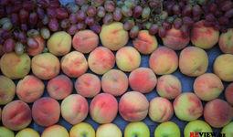 За десять месяцев Узбекистан экспортировал более 1 миллиона тонн плодоовощей на $1 миллиард