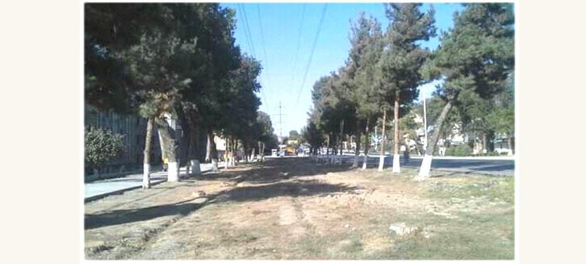 В Госкомэкологии объяснили массовую вырубку деревьев в Ташкенте