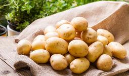 В Узбекистане определены объемы производства продуктов питания