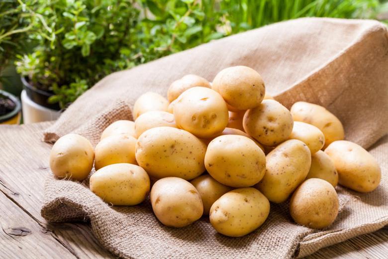 Ҳар йилгидан камида 10 фоизга кўп майдонга картошка экилиши учун уруғлик захираси яратилади