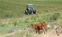 Президент Узбекистана подписал указ о реформе системы продажи и выделения земли. Главное