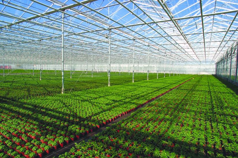 Сельское хозяйство уходит под крышу