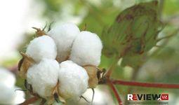 Узбекистан увеличил урожай хлопка-сырца на 9%