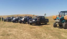 МЧС: саранчой в Узбекистане заселено свыше 320 тысяч гектаров земель