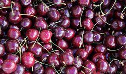 Узбекистан экспортировал черешню на $30 млн
