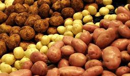 Ўзбекистонда ўтган йилга нисбатан 101,6 % кўп картошка етиштирилди