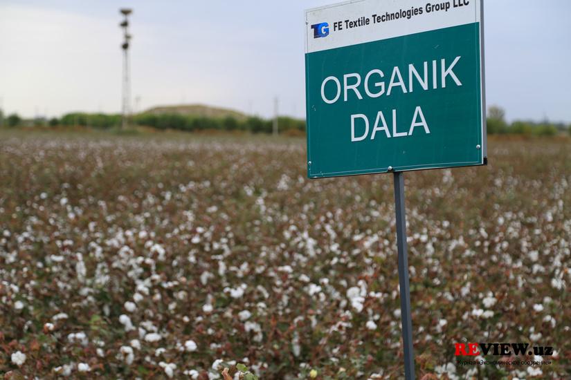 Органический хлопок, выращенный в Узбекистане доступен для экспорта