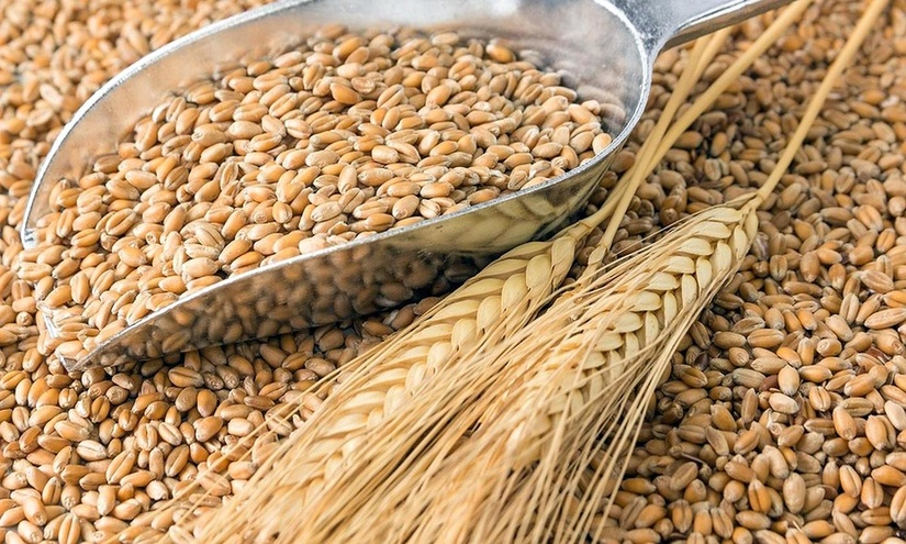 С урожая 2020 года поэтапно отменяется практика производства зерна на основе госзаказа