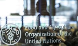 ФАО и Узбекистан официально запустили Страновую рамочную программу на $17 млн