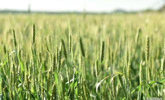 Всемирный банк выделит $500 млн Узбекистану на развитие сельского хозяйства. Как распределят средства