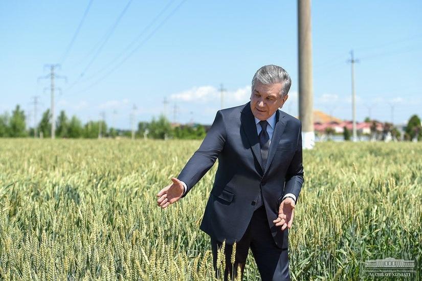 Шавкат Мирзиёев: Фермер далага режа учун эмас, даромад учун кириши керак (фото)