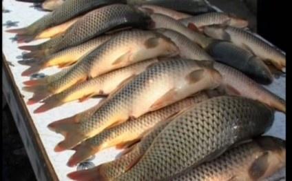 В 2020 году экспорт рыбной продукции может достигнуть $5 млн