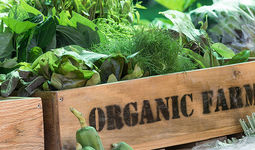 Принята Концепция развития производства органической продовольственной продукции