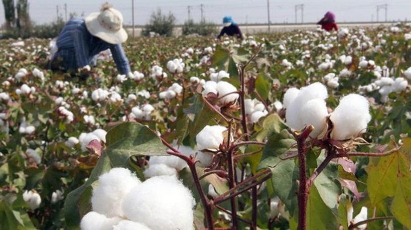 В Узбекистане увеличена плата за сбор хлопка