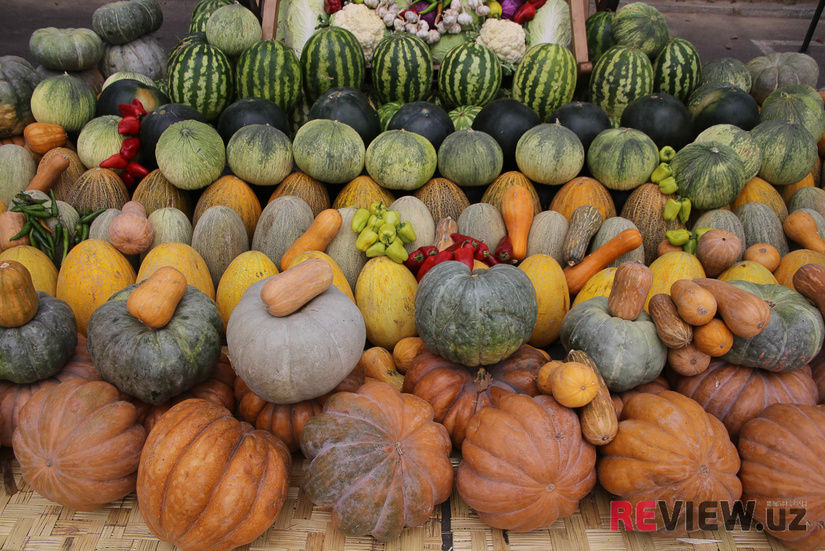 В Узбекистане создадут сельхозкооперативы в 55 специализированных районах