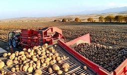 Картошка етиштирувчи фермер хўжаликларига 12 ой муддатгача тижорат кредитлари ажратилади